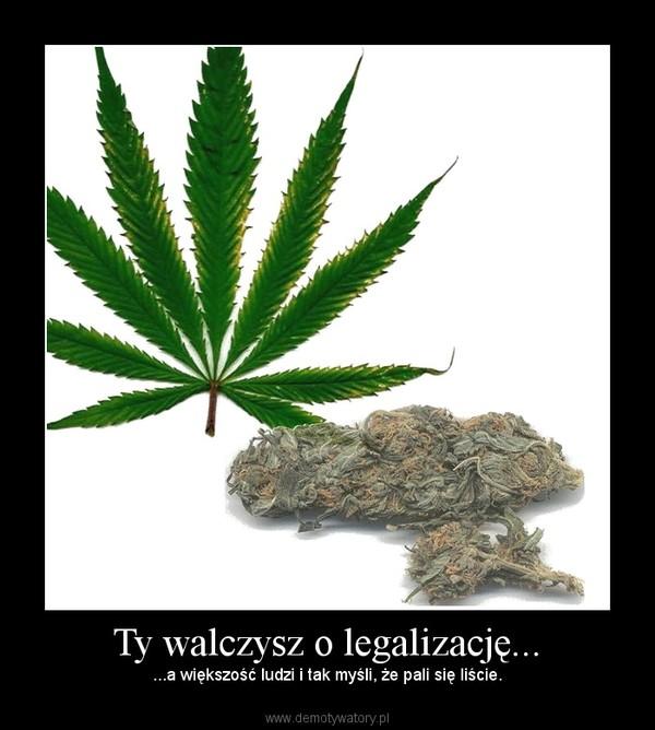 Ty walczysz o legalizację... – ...a większość ludzi i tak myśli, że pali się liście.