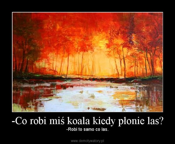 -Co robi miś koala kiedy płonie las? – -Robi to samo co las.