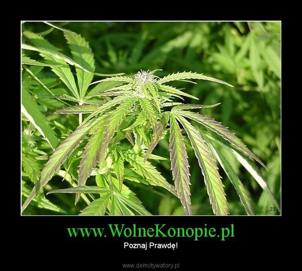 www.WolneKonopie.pl – Poznaj Prawdę!