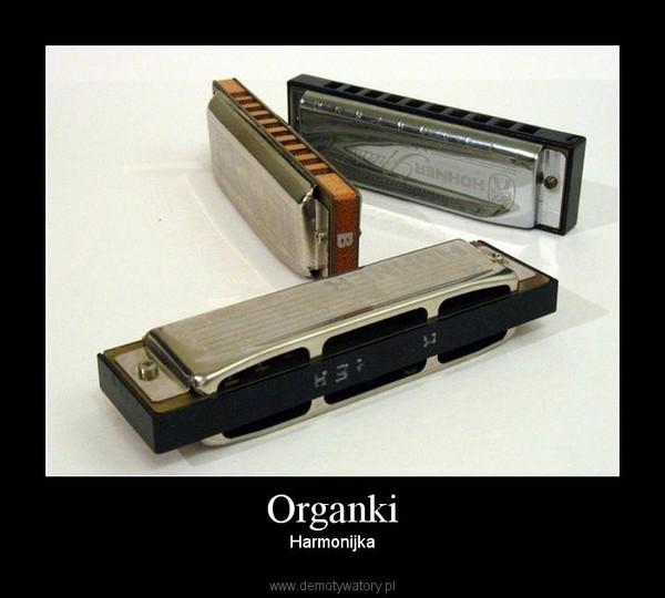 Organki – Harmonijka