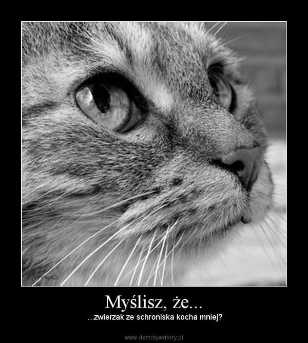 Myślisz, że... –  ...zwierzak ze schroniska kocha mniej?