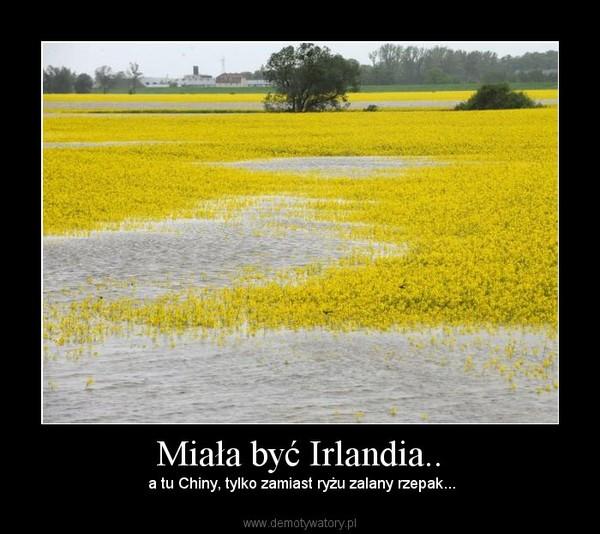 Miała być Irlandia.. –  a tu Chiny, tylko zamiast ryżu zalany rzepak...