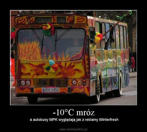 -10°C mróz –  a autobusy MPK wyglądają jak z reklamy Winterfresh
