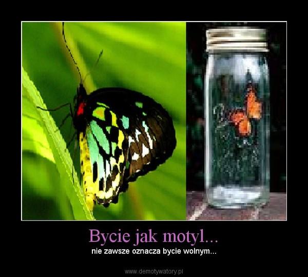 Bycie jak motyl... – nie zawsze oznacza bycie wolnym...