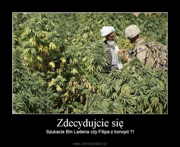 Zdecydujcie się – Szukacie Bin Ladena czy Filipa z konopii ?!