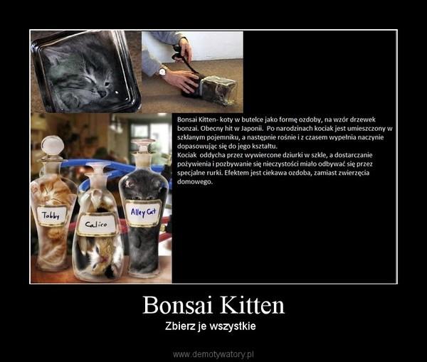 Bonsai Kitten – Zbierz je wszystkie