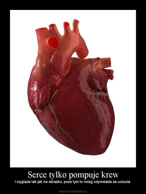 Serce tylko pompuje krew