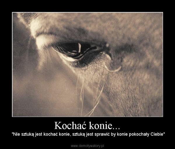 """Kochać konie... – """"Nie sztuką jest kochać konie, sztuką jest sprawić by konie pokochały Ciebie"""""""