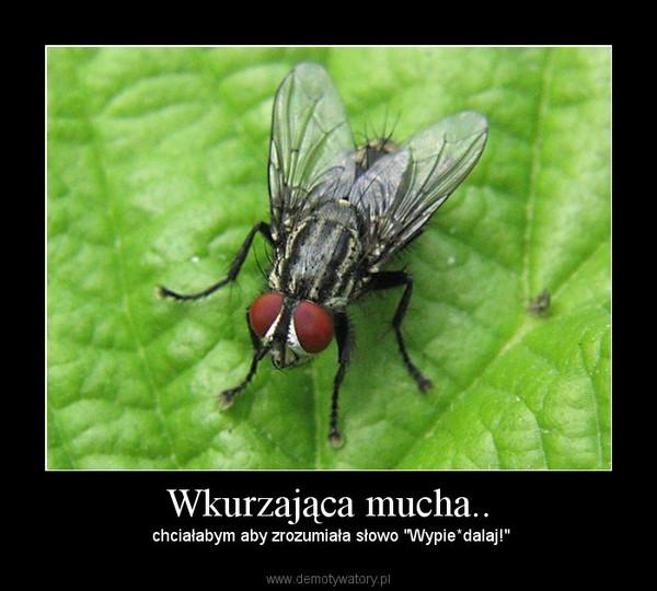 """Wkurzająca mucha.. – chciałabym aby zrozumiała słowo """"Wypie*dalaj!"""""""