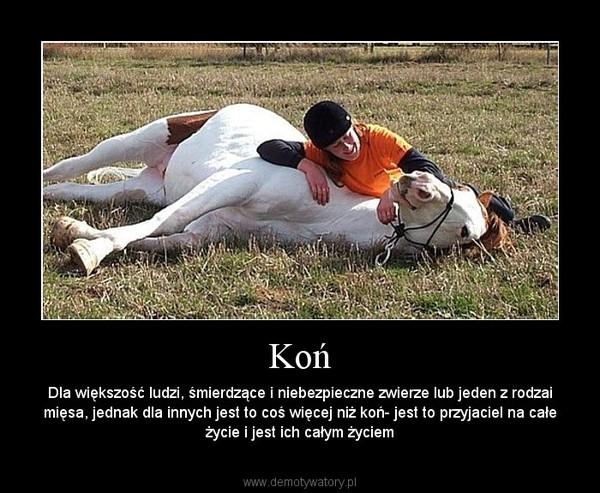Koń Demotywatorypl