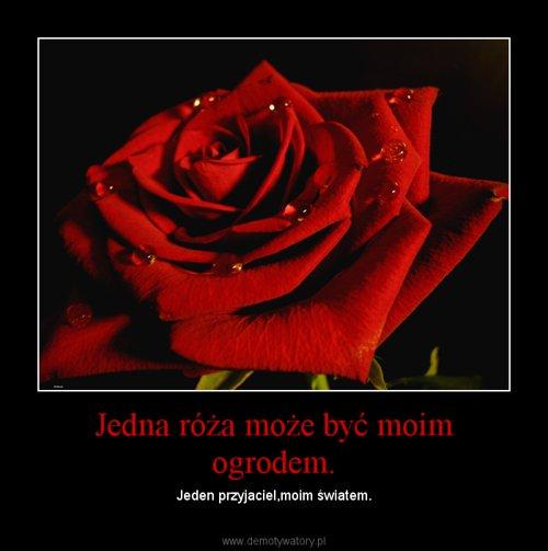 Jedna róża może być moim ogrodem.