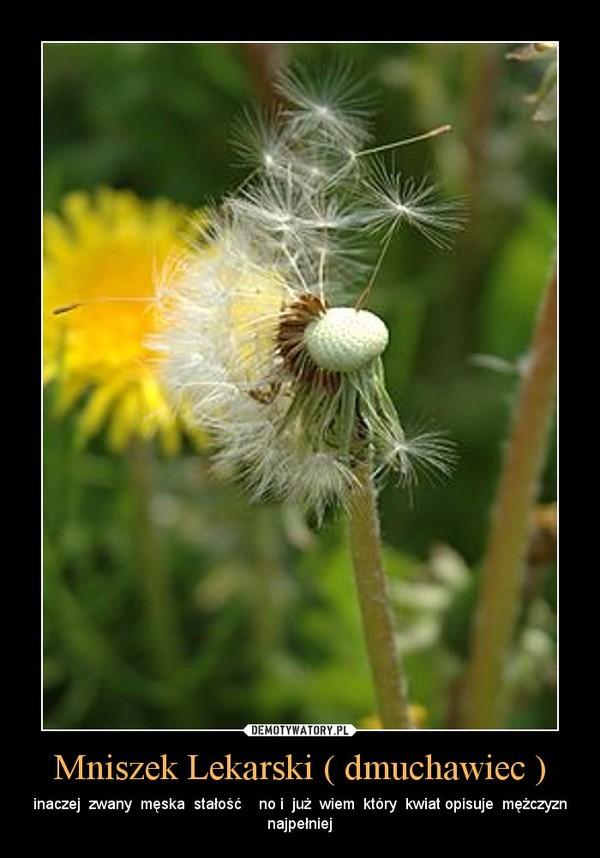 Mniszek Lekarski ( dmuchawiec ) – inaczej  zwany  męska  stałość    no i  już  wiem  który  kwiat opisuje  mężczyzn najpełniej