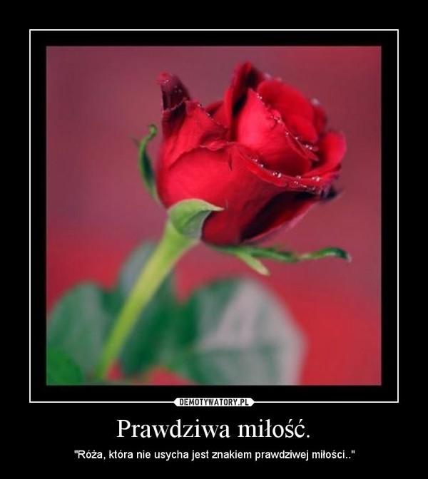 """Prawdziwa miłość. – """"Róża, która nie usycha jest znakiem prawdziwej miłości.."""""""