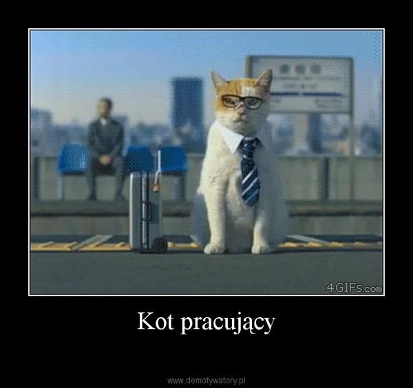 Kot pracujący –