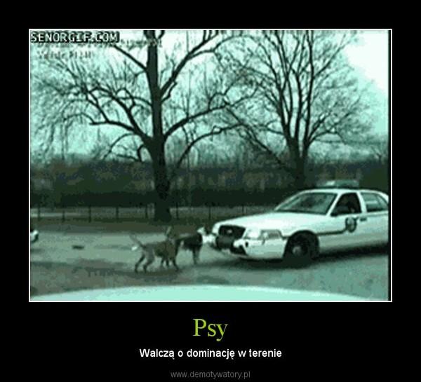 Psy – Walczą o dominację w terenie