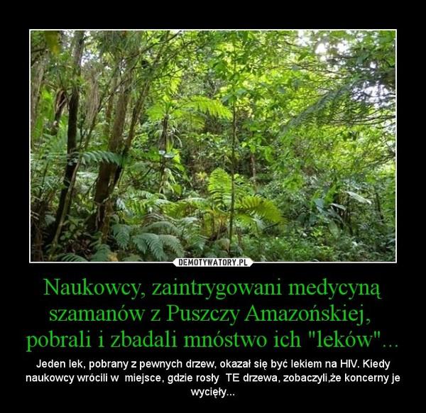"""Naukowcy, zaintrygowani medycyną szamanów z Puszczy Amazońskiej,  pobrali i zbadali mnóstwo ich """"leków""""... – Jeden lek, pobrany z pewnych drzew, okazał się być lekiem na HIV. Kiedy naukowcy wrócili w  miejsce, gdzie rosły  TE drzewa, zobaczyli,że koncerny je wycięły..."""