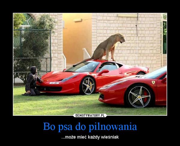 Bo psa do pilnowania – ...może mieć każdy wieśniak