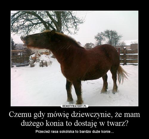 Czemu gdy mówię dziewczynie, że mam dużego konia to dostaję w twarz?