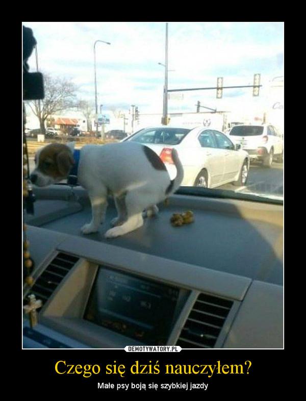 Czego się dziś nauczyłem? – Małe psy boją się szybkiej jazdy