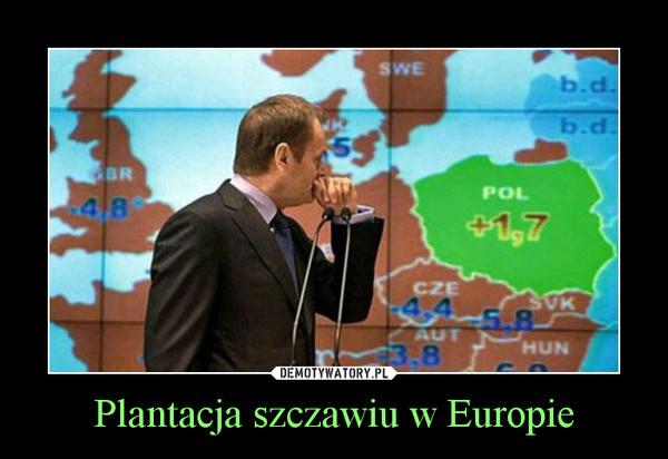 Plantacja szczawiu w Europie –