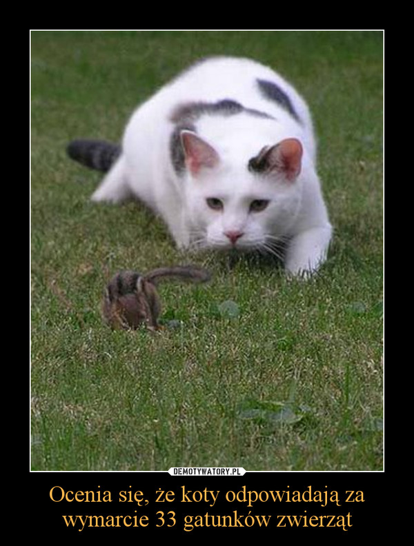 Ocenia się, że koty odpowiadają za wymarcie 33 gatunków zwierząt –
