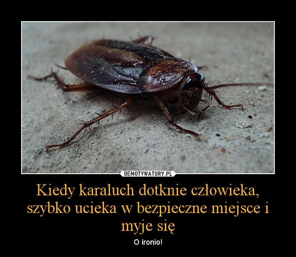 Kiedy karaluch dotknie człowieka, szybko ucieka w bezpieczne miejsce i myje się – O ironio!
