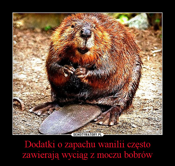 Dodatki o zapachu wanilii często zawierają wyciąg z moczu bobrów –