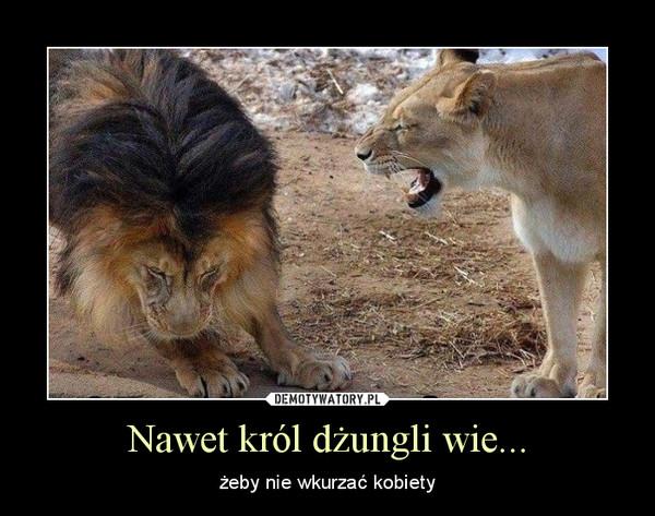 Nawet król dżungli wie... – żeby nie wkurzać kobiety