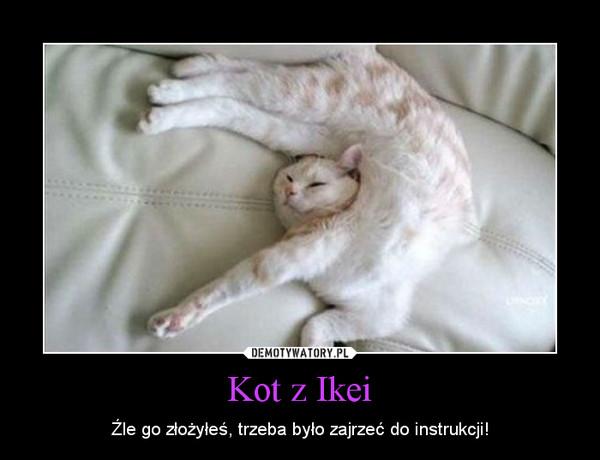Kot z Ikei – Źle go złożyłeś, trzeba było zajrzeć do instrukcji!