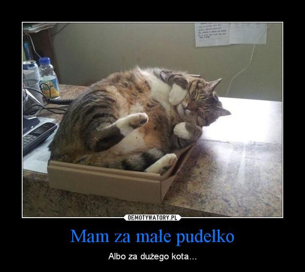 Mam za małe pudełko – Albo za dużego kota...