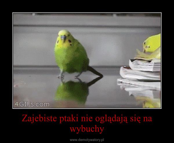 Zajebiste ptaki nie oglądają się na wybuchy –
