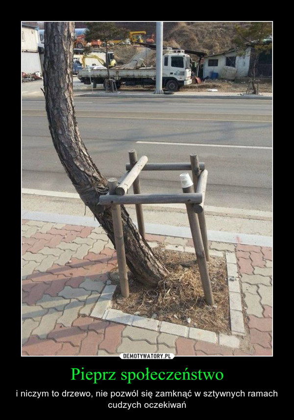 Pieprz społeczeństwo – i niczym to drzewo, nie pozwól się zamknąć w sztywnych ramach cudzych oczekiwań