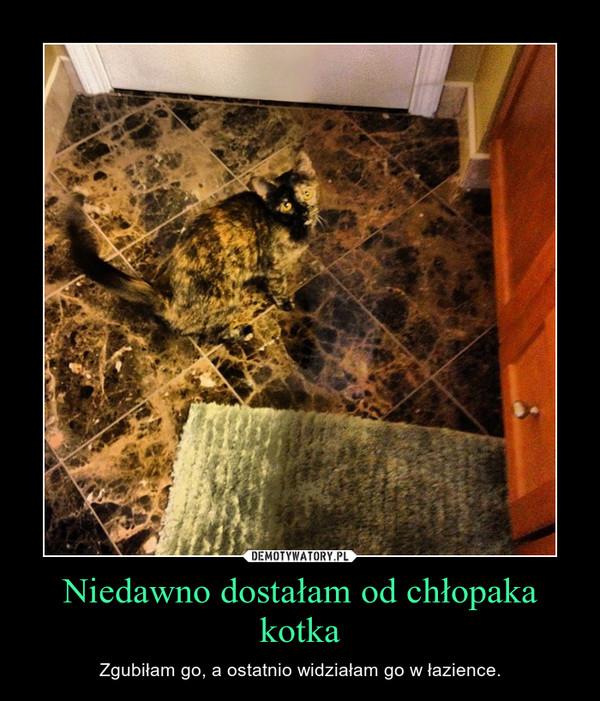 Niedawno dostałam od chłopaka kotka – Zgubiłam go, a ostatnio widziałam go w łazience.