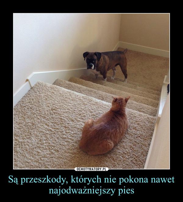 Są przeszkody, których nie pokona nawet najodważniejszy pies –