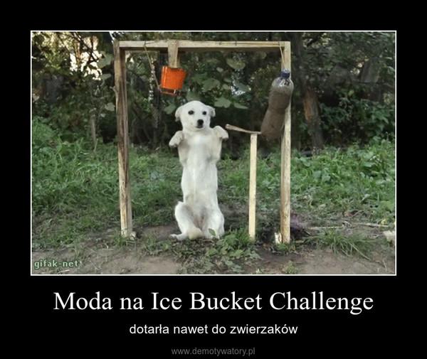 Moda na Ice Bucket Challenge – dotarła nawet do zwierzaków