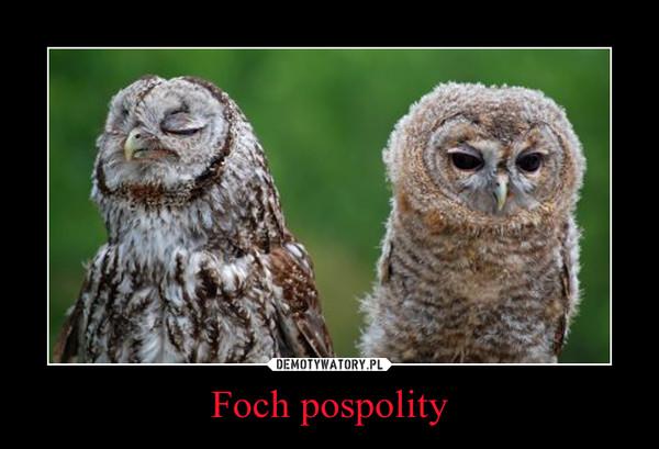 Foch pospolity –