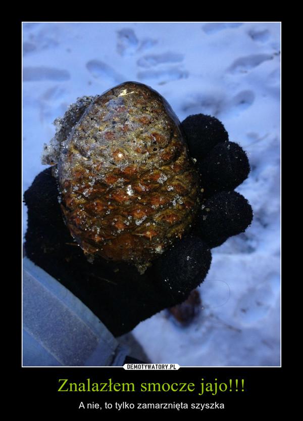 Znalazłem smocze jajo!!! – A nie, to tylko zamarznięta szyszka