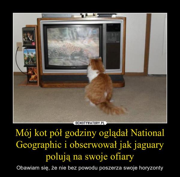 Mój kot pół godziny oglądał National Geographic i obserwował jak jaguary polują na swoje ofiary – Obawiam się, że nie bez powodu poszerza swoje horyzonty