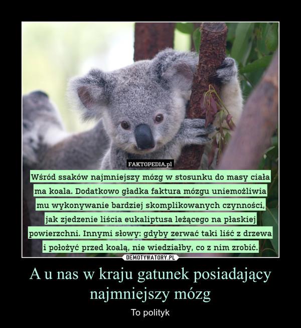 A u nas w kraju gatunek posiadający najmniejszy mózg – To polityk Wśród ssaków najmniejszy mózg w stosunku do masy ciała ma koala. Dodatkowo gładka faktura mózgu uniemożliwia mu wykonywanie bardziej skomplikowanych czynności,jak zjedzenie liścia eukaliptusa leżącego na płaskiej powierzchni. Innymi słowy: gdyby zerwać taki liść z drzewa i położyć przed koalą, nie wiedziałby, co z nim zrobić.