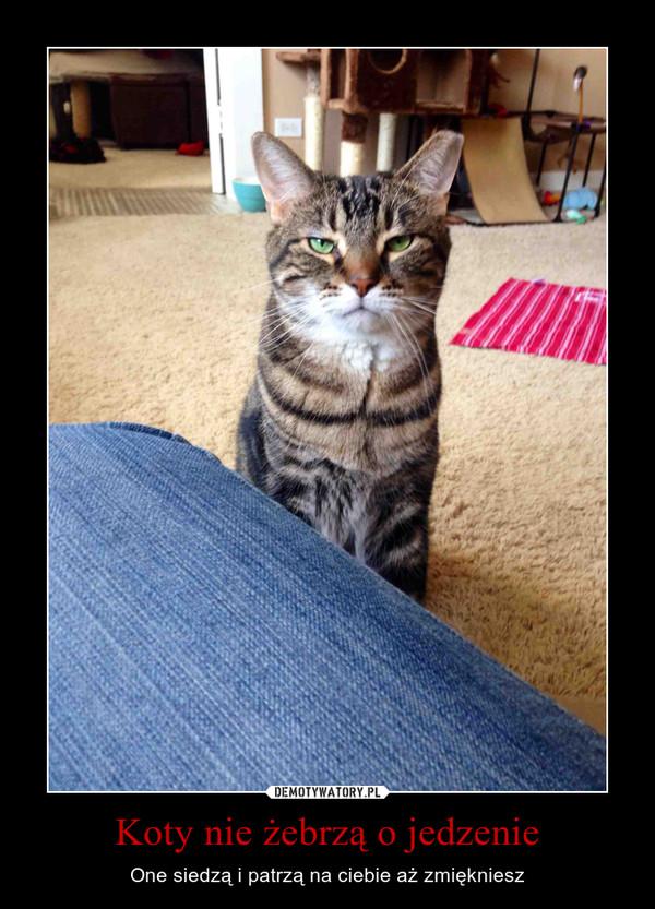 Koty nie żebrzą o jedzenie – One siedzą i patrzą na ciebie aż zmiękniesz