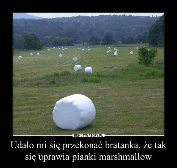 Udało mi się przekonać bratanka, że tak się uprawia pianki marshmallow –