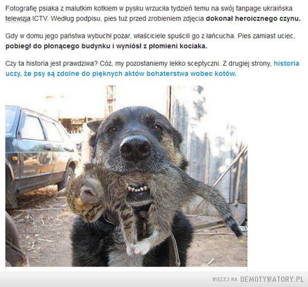 Uczyć się od zwierząt –