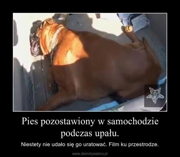 Pies pozostawiony w samochodzie podczas upału. – Niestety nie udało się go uratować. Film ku przestrodze.