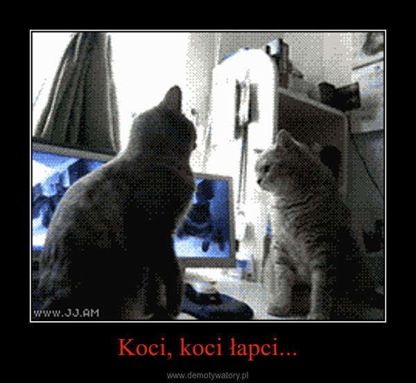 Koci, koci łapci... –