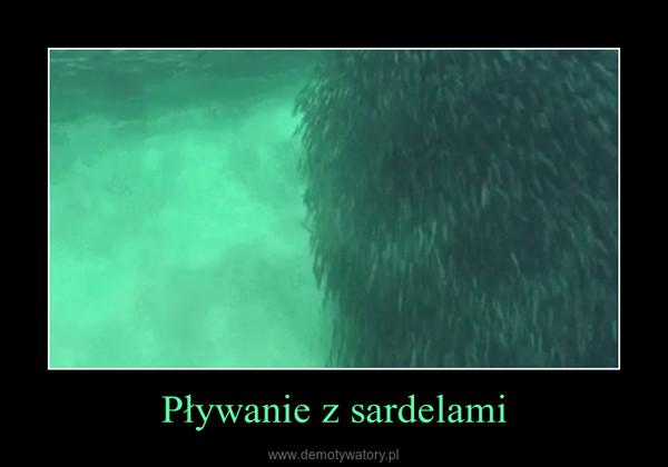 Pływanie z sardelami –