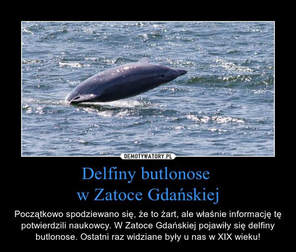 Delfiny butlonose w Zatoce Gdańskiej – Początkowo spodziewano się, że to żart, ale właśnie informację tę potwierdzili naukowcy. W Zatoce Gdańskiej pojawiły się delfiny butlonose. Ostatni raz widziane były u nas w XIX wieku!
