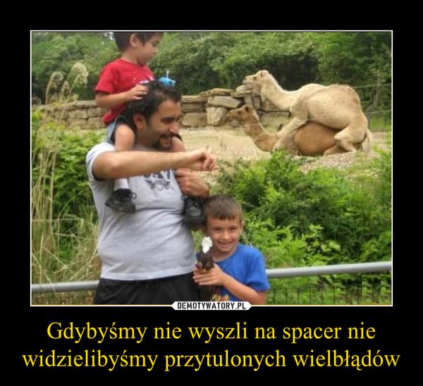Gdybyśmy nie wyszli na spacer nie widzielibyśmy przytulonych wielbłądów –