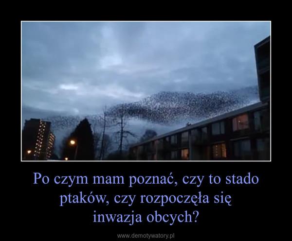 Po czym mam poznać, czy to stado ptaków, czy rozpoczęła sięinwazja obcych? –
