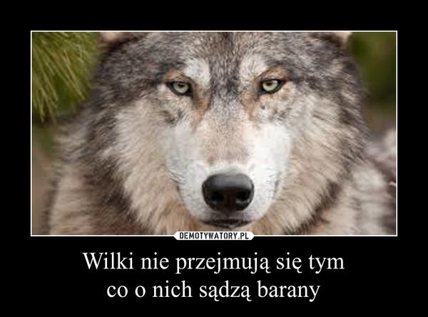 Wilki nie przejmują się tymco o nich sądzą barany –