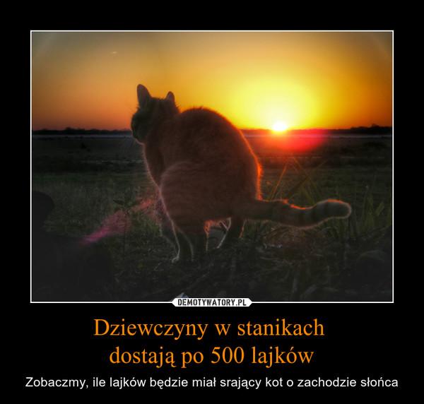 Dziewczyny w stanikach dostają po 500 lajków – Zobaczmy, ile lajków będzie miał srający kot o zachodzie słońca